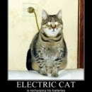 electric cat