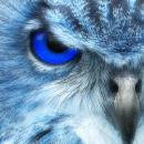 first blue owl