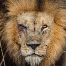 LionGeorge